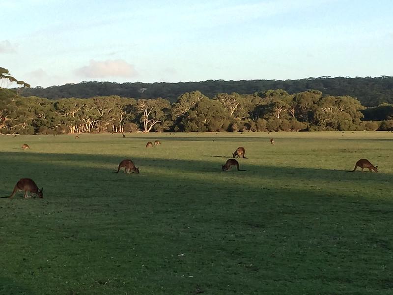 Kangaroo Island Nature Experiences