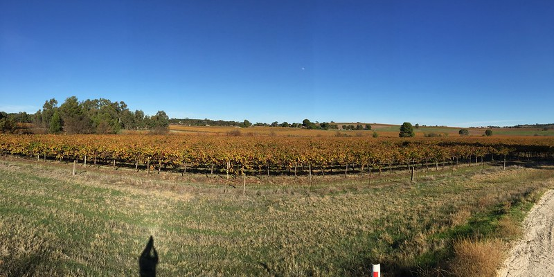 view over a barossa yineyard