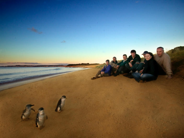Top things to do in Melbourne - Penguins Koalas and Wildlife Tour Phillip Island