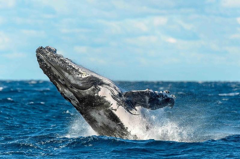Whales near Kangaroo Island