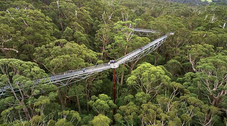 Giants Tree Top Walk in the Denmark/WA region.